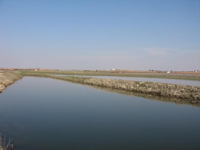 Río Záncara a su paso por el término de Mota del Cuervo